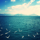 Seagull Dance in Yeosu