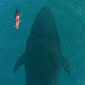 LG Big Whale WallPaper