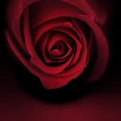 Rose [LG Home]