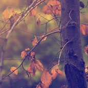 Autumn and trees Wallpaper