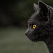 Black Cat [LG Home+]